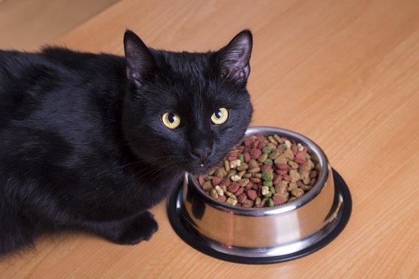 cat-eating-food-dish-shutterstock_361821539.jpg